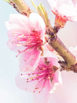 Amie Willis